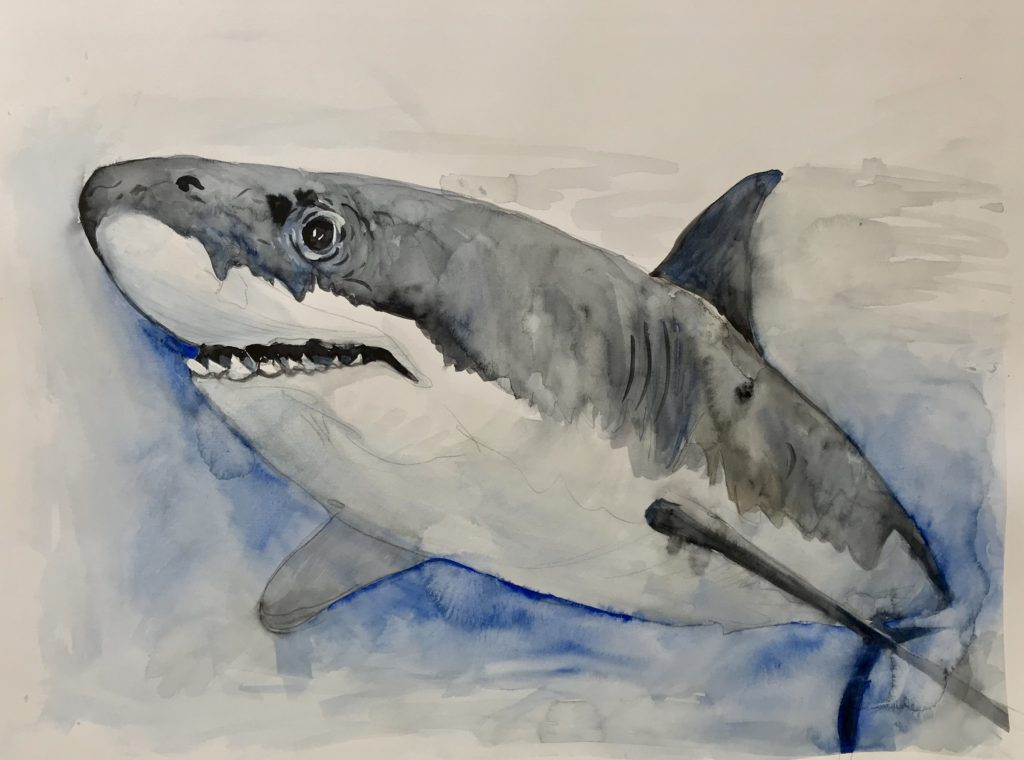 Shark from The Vegan Project, 2019 Rita Bolla
