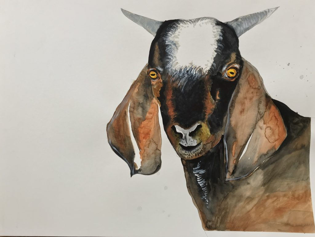 Goat from The Vegan Project, 2019 Rita Bolla