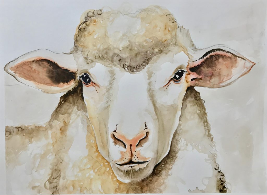 Sheep from The Vegan Project, 2019 Rita Bolla