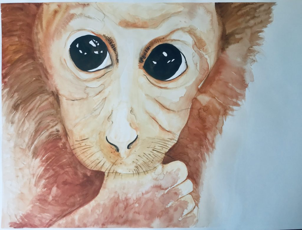 Monkey from The Vegan Project, 2019 Rita Bolla